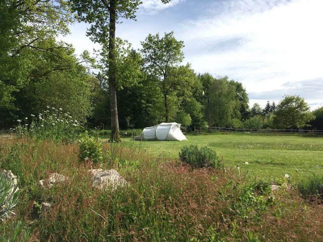 Main Camping Feild Trees